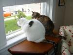 The Mooshies witnessing a doggie doo-doo incident.